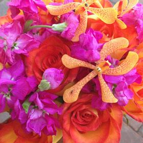 Anna-Orange-&-Pink